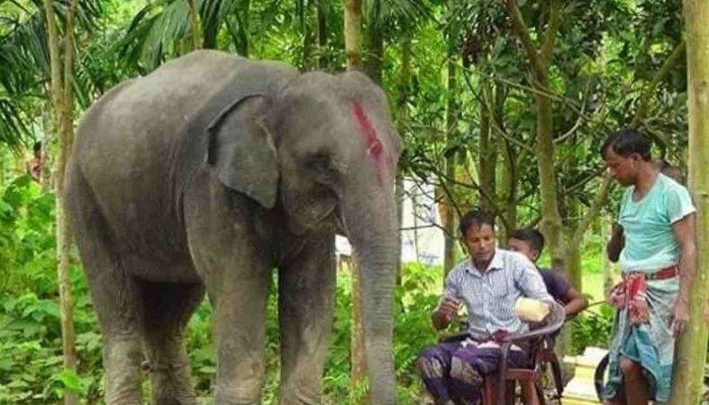 Dulal Chandra Roy, a farmer from Lalmonirhat's Panchagram union, has sold his lands to buy his wife an elephant to fulfil her dream