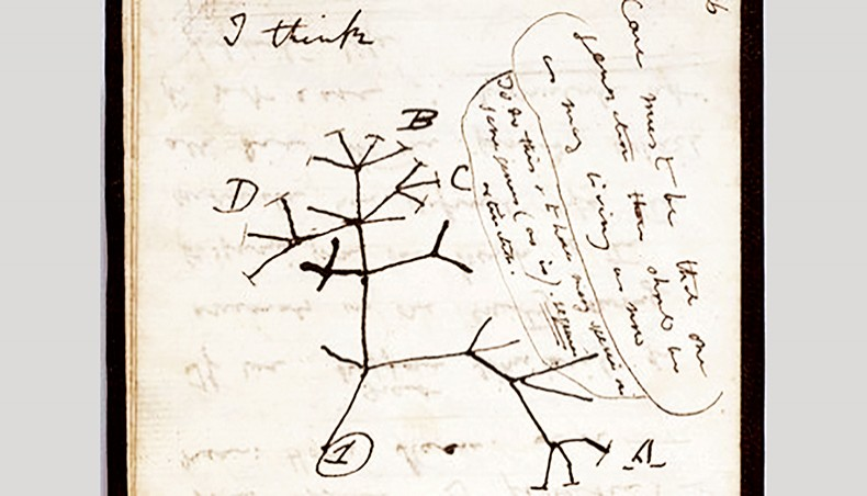 Tree of Life: Charles Darwin notebooks 'stolen' from Cambridge University